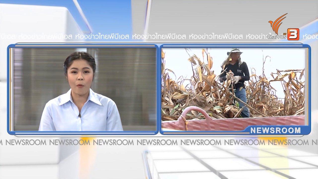 ห้องข่าว ไทยพีบีเอส NEWSROOM - ปลูกข้าวโพดหลังนา ประโยชน์ตกที่ใคร ?