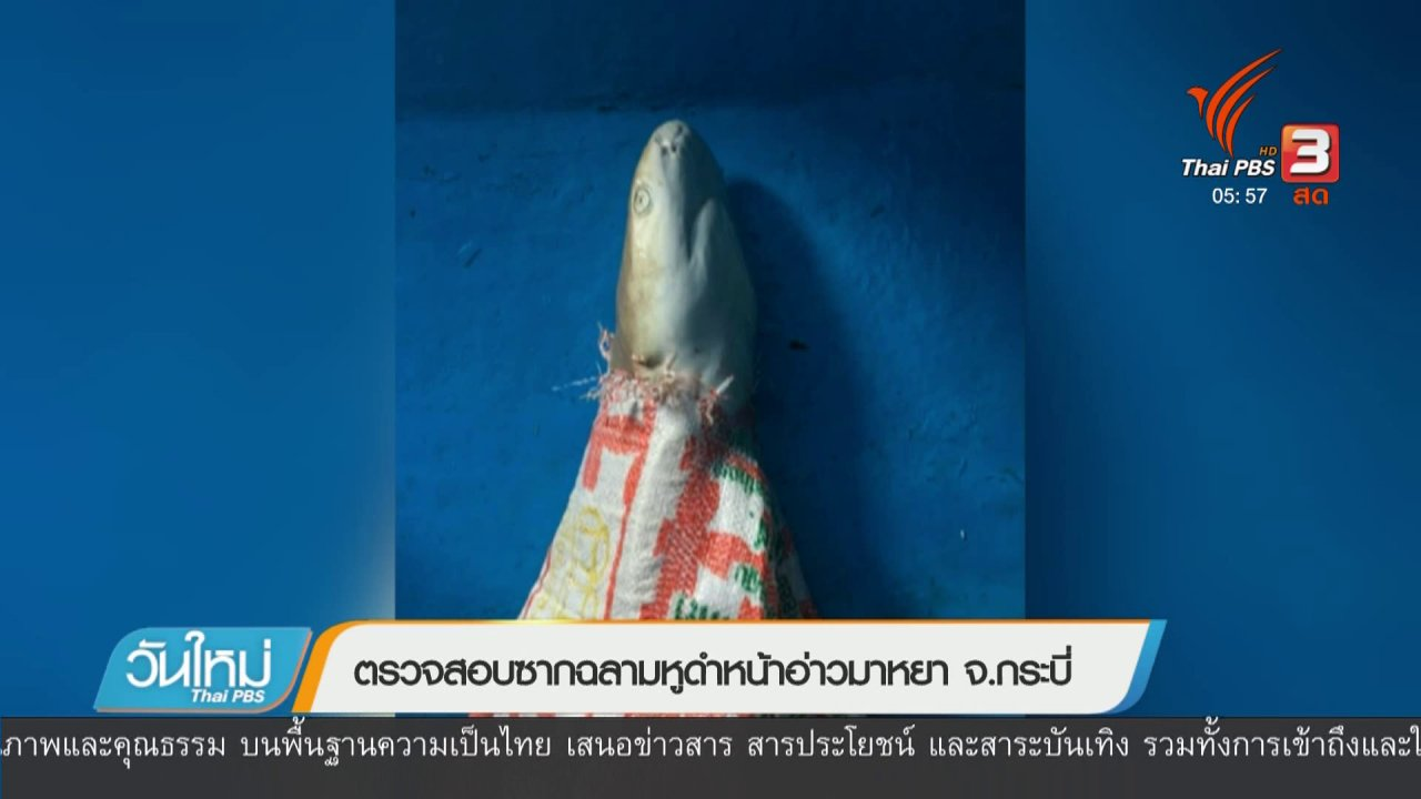 วันใหม่  ไทยพีบีเอส - ตรวจสอบซากฉลามหูดำหน้าอ่าวมาหยา จ.กระบี่