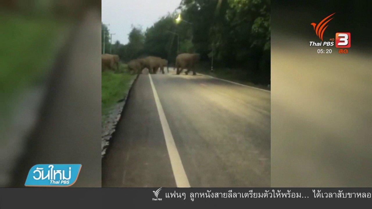 วันใหม่  ไทยพีบีเอส - เตรียมย้ายช้างพ้นถนนสาย 3076 จ.ฉะเชิงเทรา