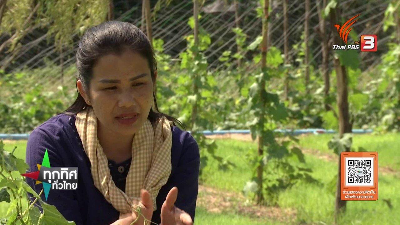 ทุกทิศทั่วไทย - ชุมชนทั่วไทย : ชาใบข้าวหอมมะลิ จ.ร้อยเอ็ด