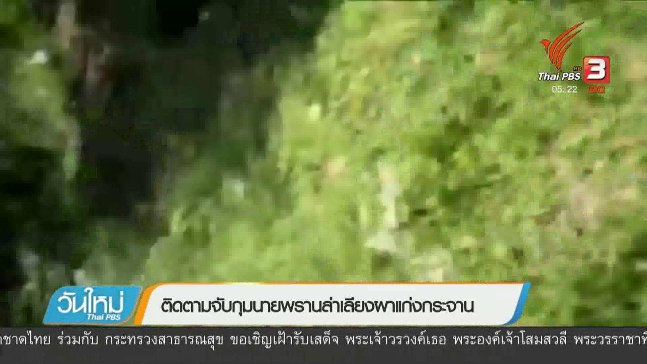 วันใหม่  ไทยพีบีเอส - ติดตามจับกุมนายพรานล่าเลียงผาแก่งกระจาน