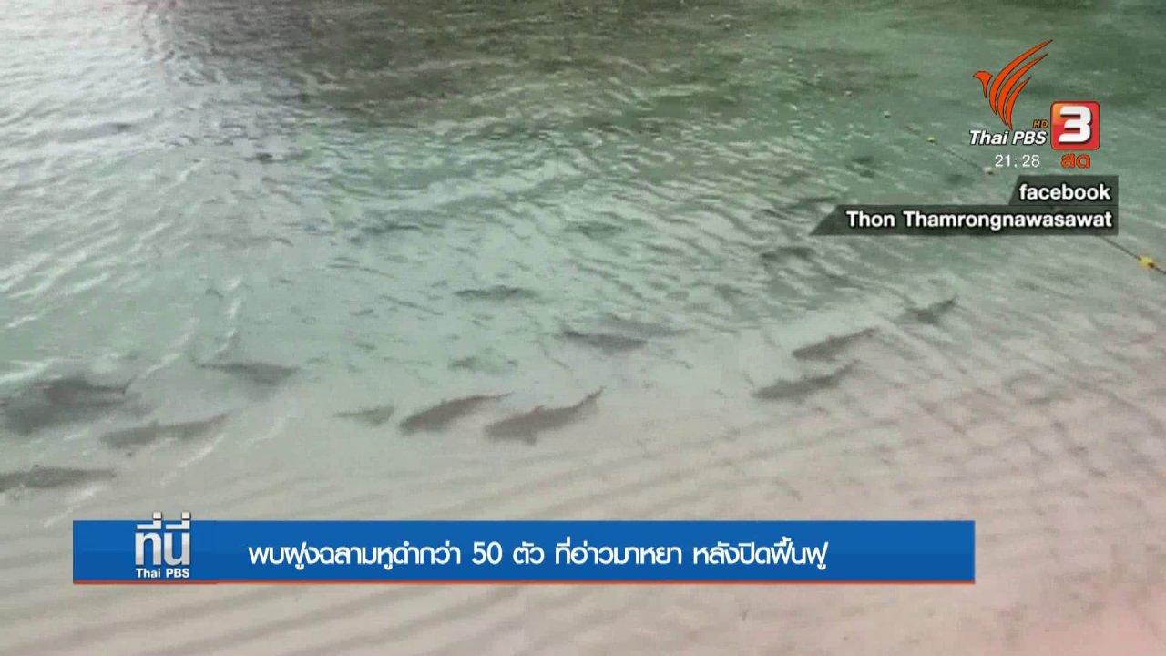ที่นี่ Thai PBS - พบฝูงฉลามหูดำกว่า 50 ตัว ที่อ่าวมาหยา หลังปิดฟื้นฟู