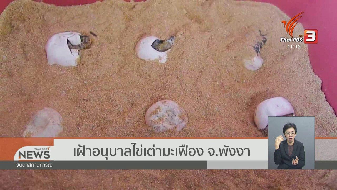 จับตาสถานการณ์ - เฝ้าอนุบาลไข่เต่ามะเฟือง จ.พังงา