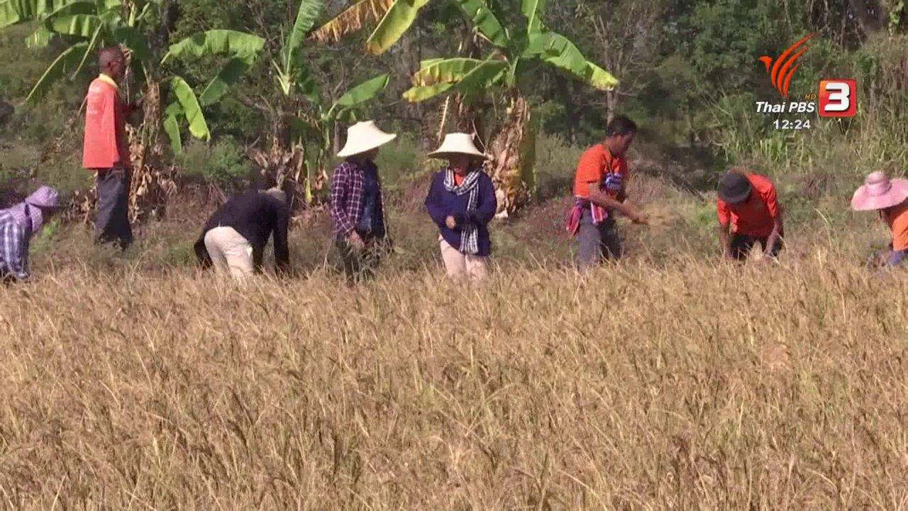 จับตาสถานการณ์ - ตะลุยทั่วไทย : โรงสีชุมชน