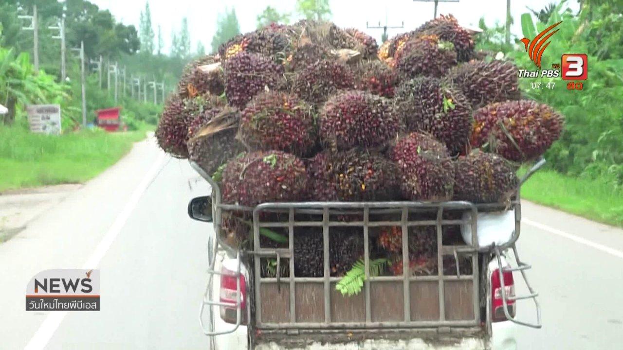 วันใหม่  ไทยพีบีเอส - C-site Report : สำรวจพืช ดาวรุ่ง - ดาวร่วง ในศตวรรษนี้