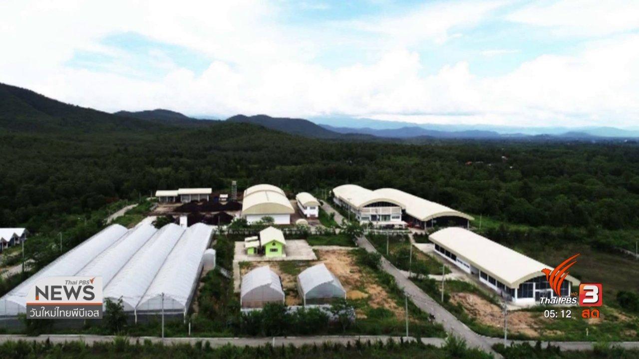 วันใหม่  ไทยพีบีเอส - 4 องค์กรเดินหน้าวิจัยกัญชา - กัญชง