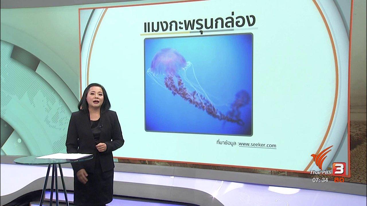 วันใหม่  ไทยพีบีเอส - รู้เท่าทันภัย : อันตรายจากแมงกะพรุนในฤดูฝน