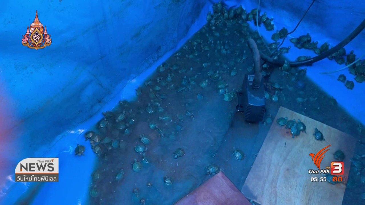 วันใหม่  ไทยพีบีเอส - ยึดลูกเต่าและปลาสวยงามต้องหาบัญชีไซเตส
