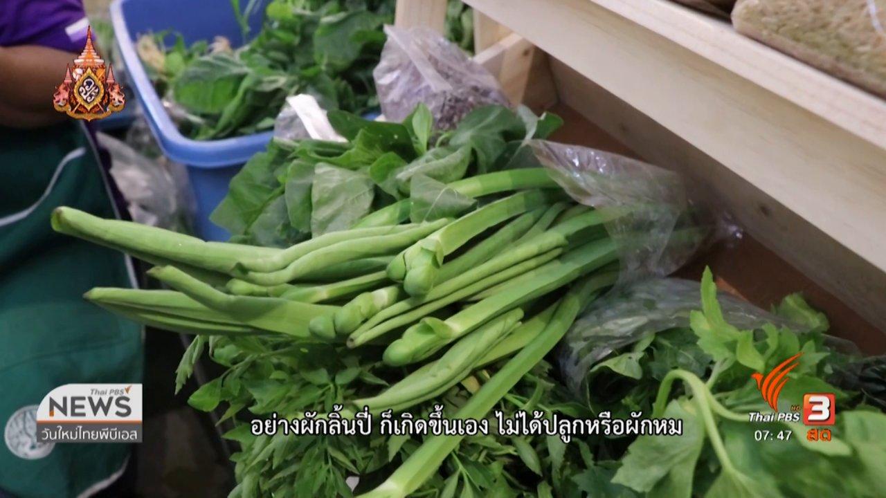 วันใหม่  ไทยพีบีเอส - C-site Report : มหกรรมอาหารปลอดภัยใส่ใจสุขภาพ จ.ขอนแก่น