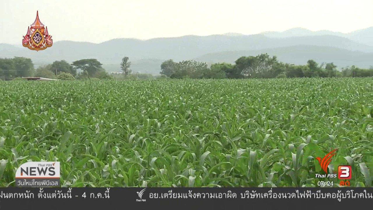 วันใหม่  ไทยพีบีเอส - ลงทุนทำกิน : ผลกระทบหนอนกระทู้กัดกินข้าวโพด