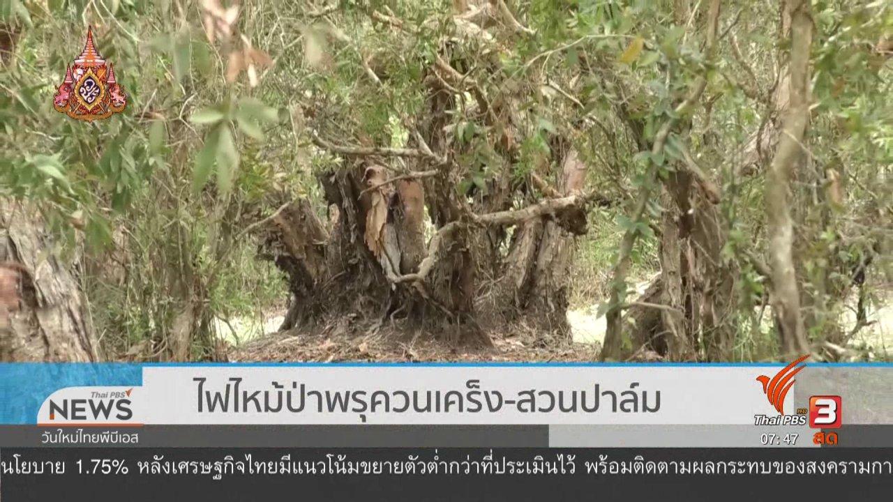 วันใหม่  ไทยพีบีเอส - C-site Report : ไฟไหม้ป่าพรุควนเคร็ง - สวนปาล์ม
