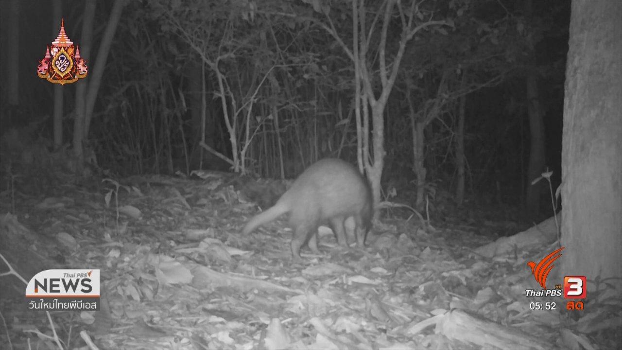 วันใหม่  ไทยพีบีเอส - พบเสือลายเมฆ สมเสร็จ และหมีหมาในผืนป่าแก่งกระจาน