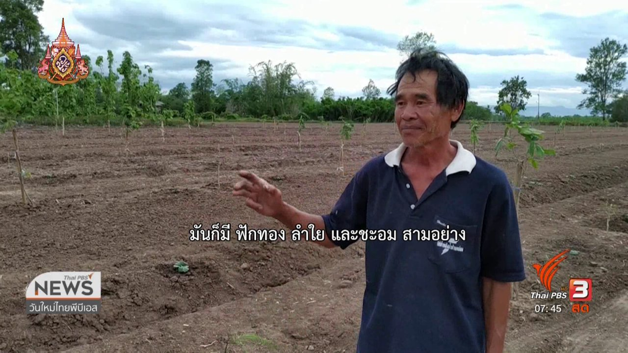 วันใหม่  ไทยพีบีเอส - C-site Report : เกษตรกรบ้านถ้ำ จ.พะเยา