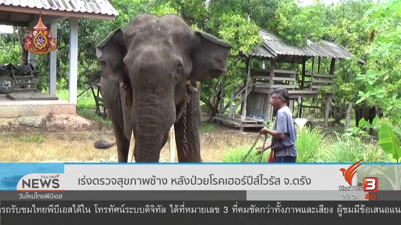 วันใหม่  ไทยพีบีเอส - เร่งตรวจสุขภาพช้าง หลังป่วยโรคเฮอร์ปีส์ไวรัส จ.ตรัง