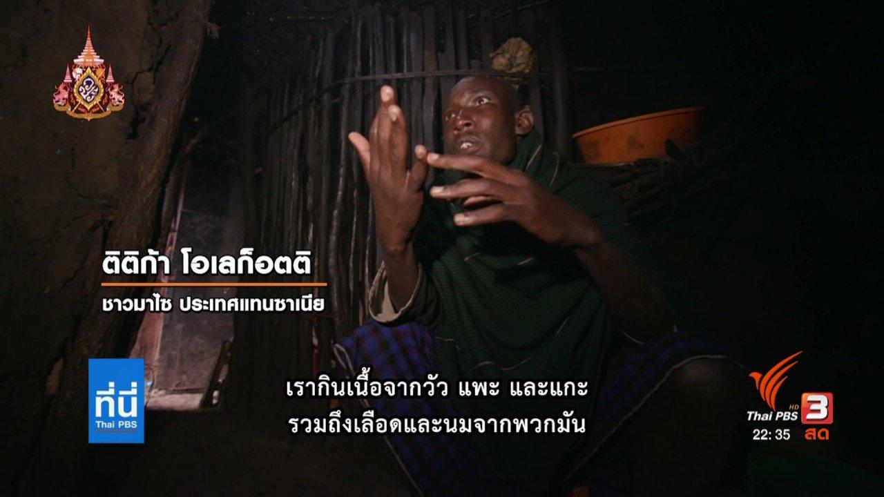 ที่นี่ Thai PBS - ความท้าทายของชีวิตชาวมาไซ