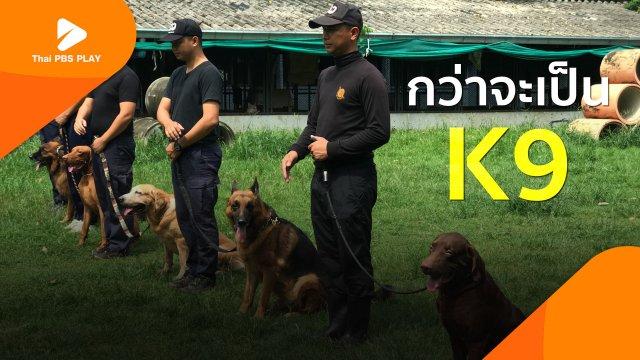 กว่าจะเป็นสุนัขตำรวจ K9