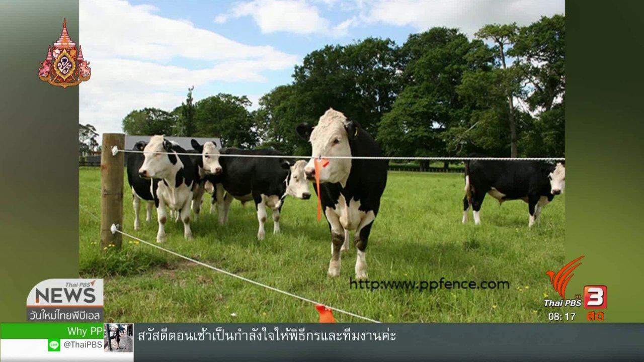 วันใหม่  ไทยพีบีเอส - จับตาข่าวเด่น : ภัยจากรั้วไฟฟ้า อันตรายถึงชีวิต