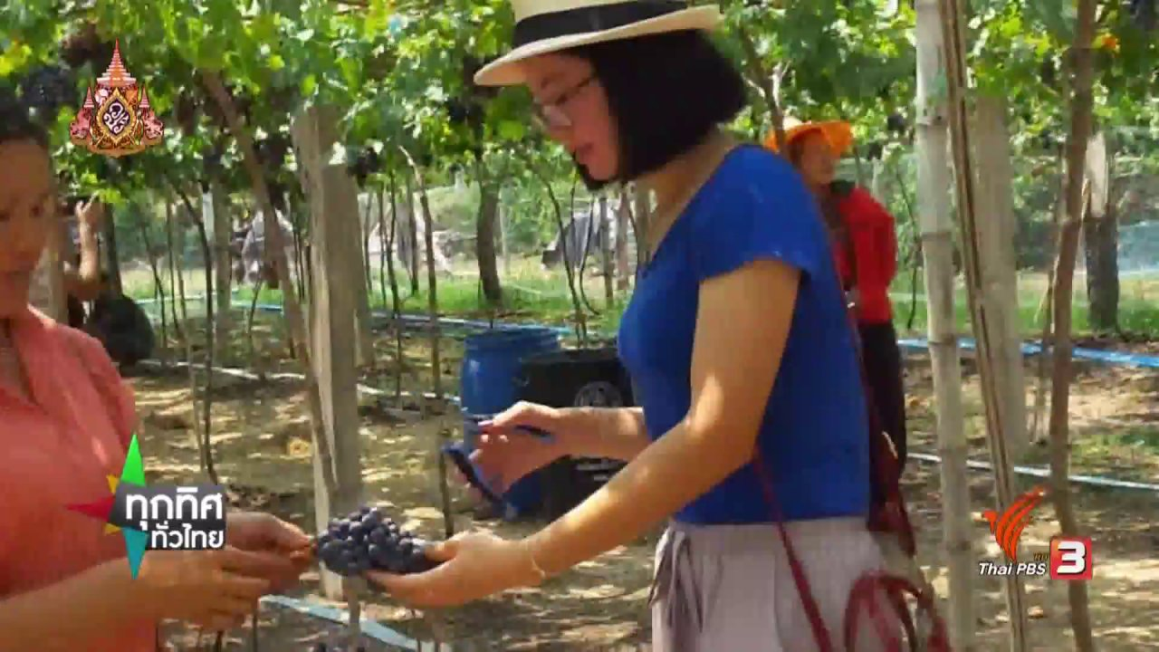 ทุกทิศทั่วไทย - ชุมชนทั่วไทย : พลิกไร่มันสำปะหลังสร้างรายได้