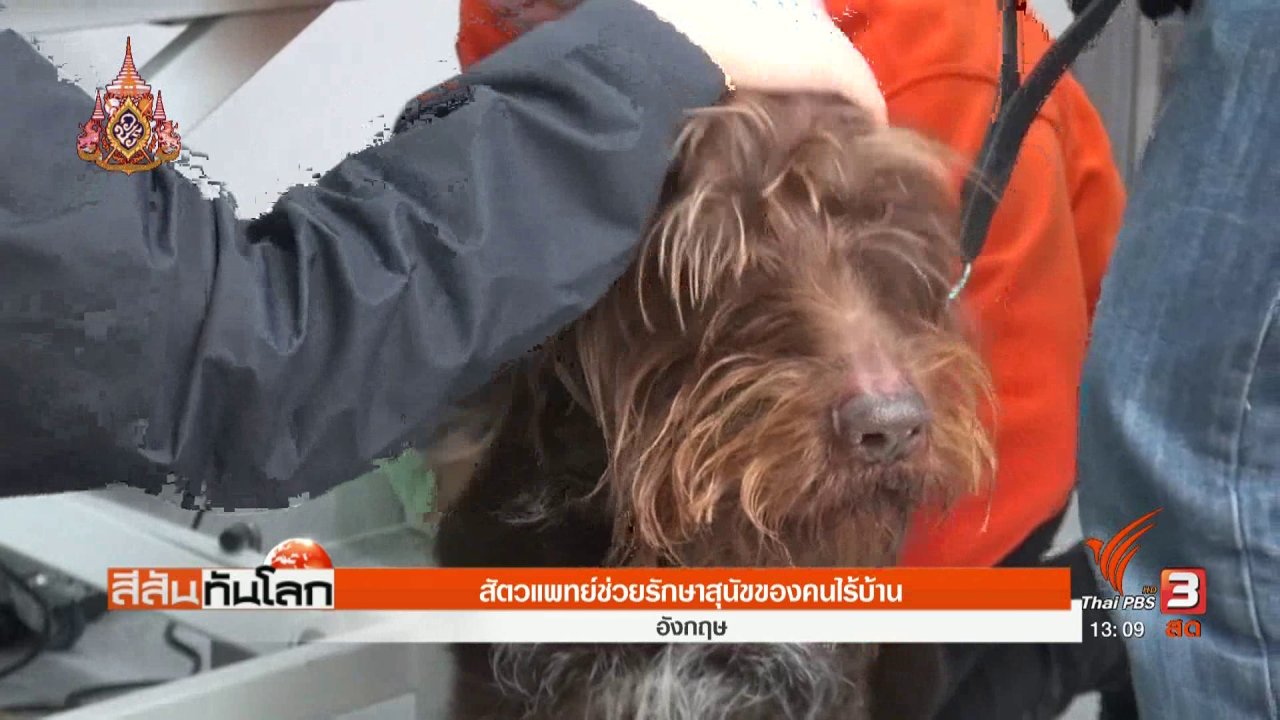 สีสันทันโลก - ช่วยสุนัขไร้บ้าน
