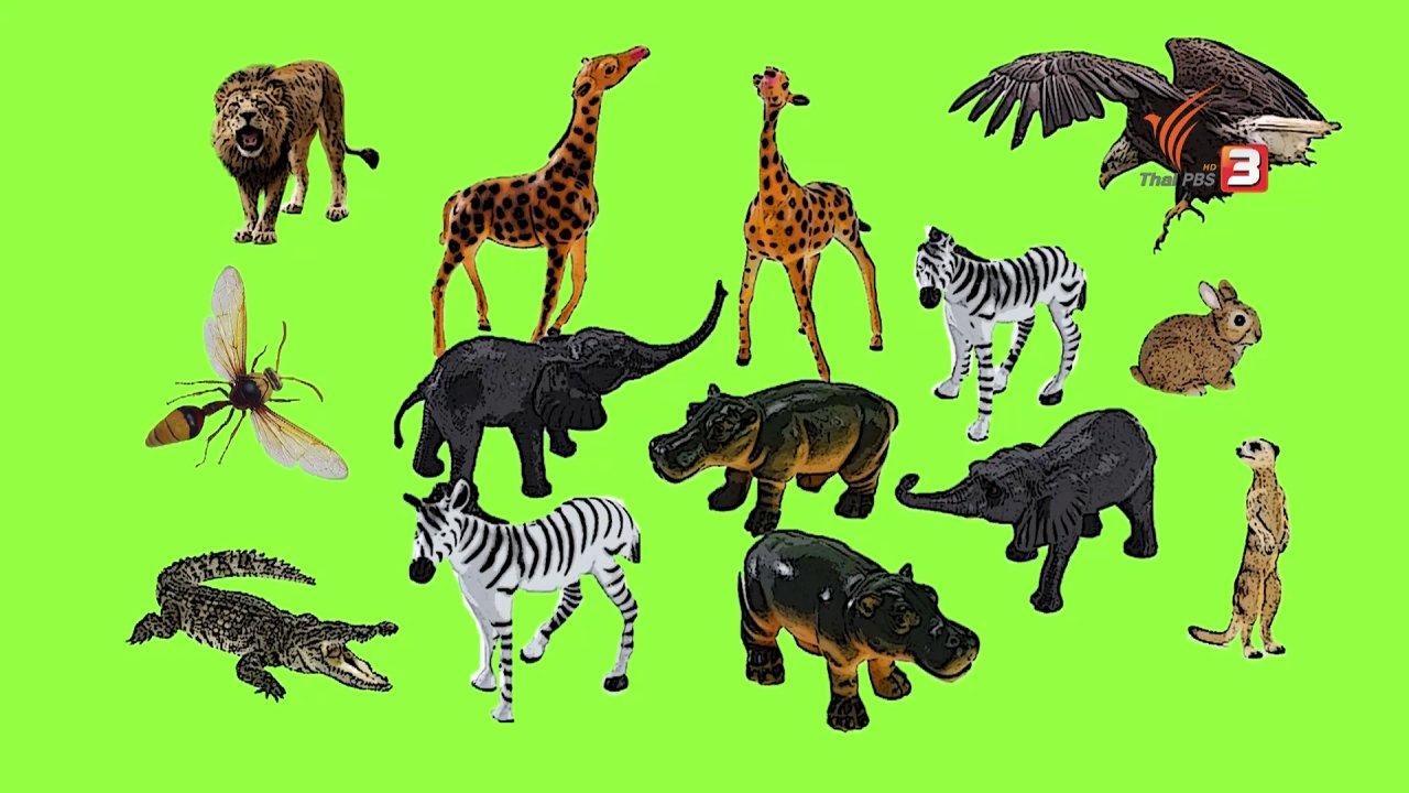 TataTitiToto ไดโนจอมป่วน - เกร็ดน่ารู้กับตาต้าตีตี้โตโต้ : สัตว์ใช้เสียงเพื่อบอกอะไรบ้าง