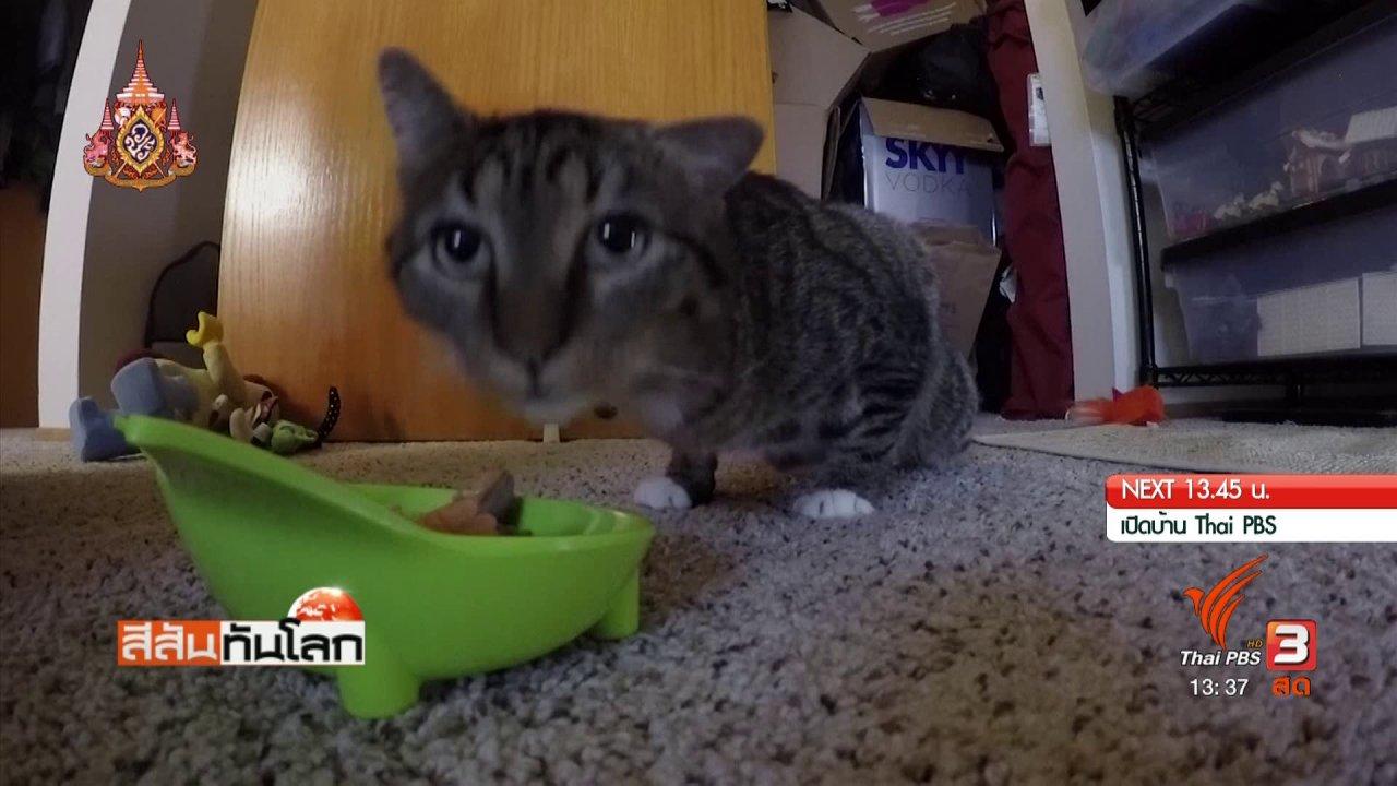 สีสันทันโลก - ทำขาเทียมแมวจากเครื่องพิมพ์ 3 มิติ