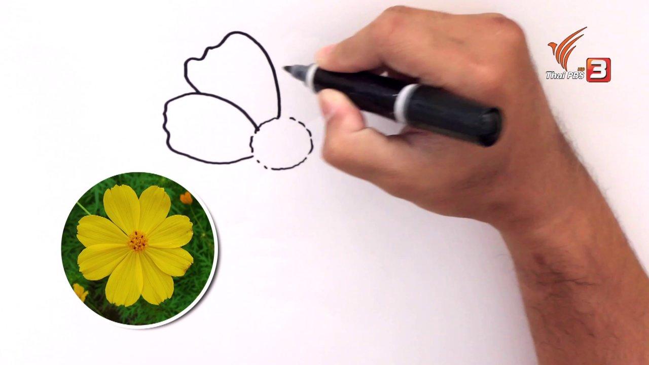 สอนศิลป์ - สอนศิลป์สอนวาด : ดอกดาวกระจาย