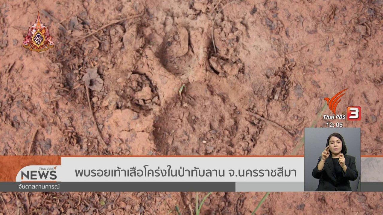 จับตาสถานการณ์ - พบรอยเท้าเสือโคร่งในป่าทับลาน จ.นครราชสีมา