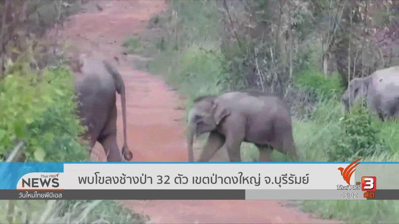 วันใหม่  ไทยพีบีเอส - พบโขลงช้างป่า 32 ตัว เขตป่าดงใหญ่ จ.บุรีรัมย์