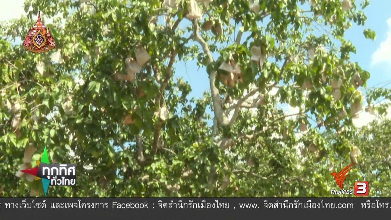 ทุกทิศทั่วไทย - อาชีพทั่วไทย : แปรรูปกระท้อน