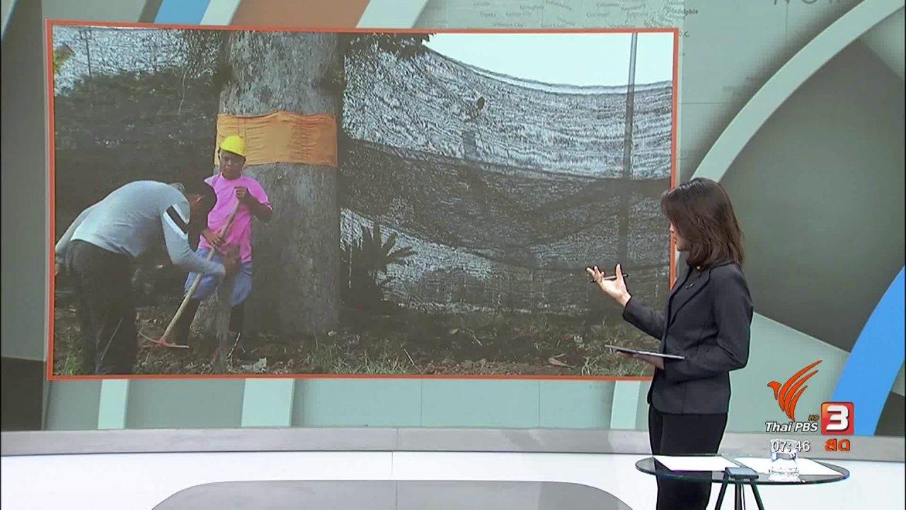 """วันใหม่  ไทยพีบีเอส - C-site Report : """"เขียวสู้ควัน"""" ฝุ่นควันกับพื้นที่สีเขียว"""