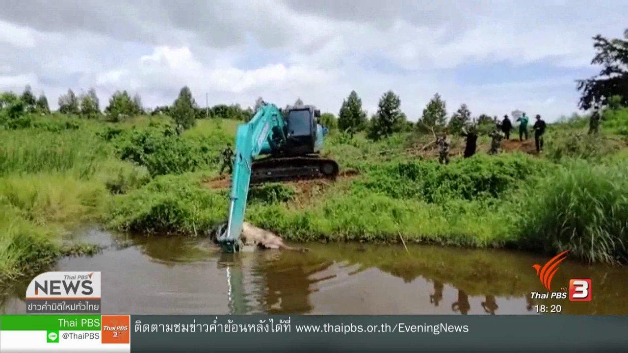 ข่าวค่ำ มิติใหม่ทั่วไทย - เร่งพิสูจน์ลูกช้างเขาอ่างฤาไนล้มปริศนา จ.ฉะเชิงเทรา