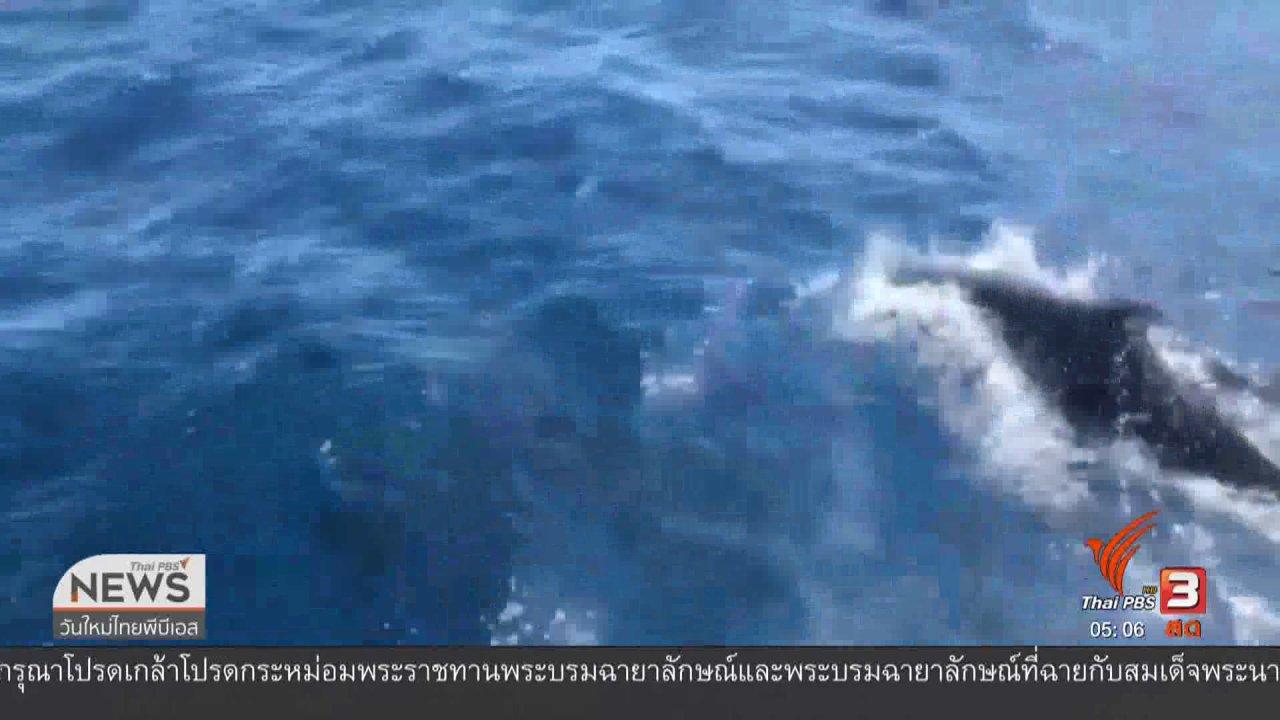 วันใหม่  ไทยพีบีเอส - พบฝูงวาฬเพชฌฆาตดำบริเวณเกาะเต่า