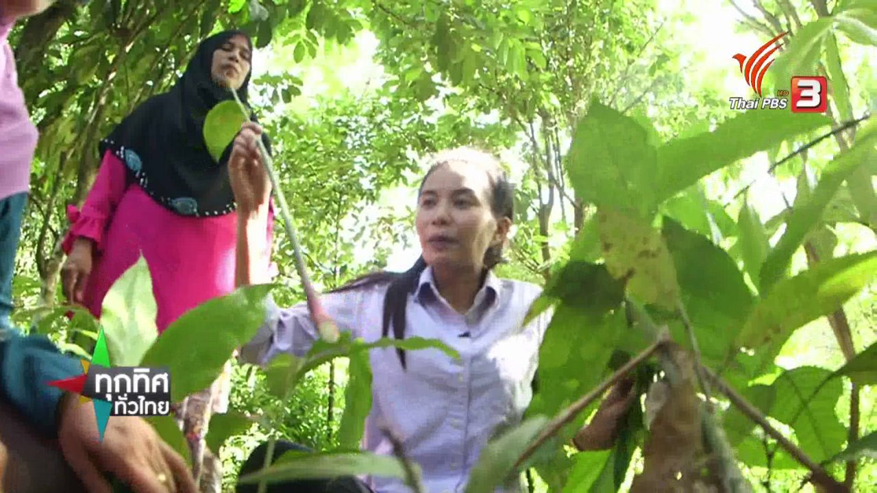 ทุกทิศทั่วไทย - ชุมชนทั่วไทย : ปลูกกระวานในสวนยาง