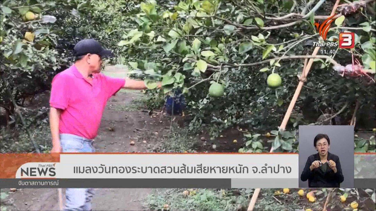 จับตาสถานการณ์ - แมลงวันทองระบาดสวนส้มเสียหายหนัก จ.ลำปาง