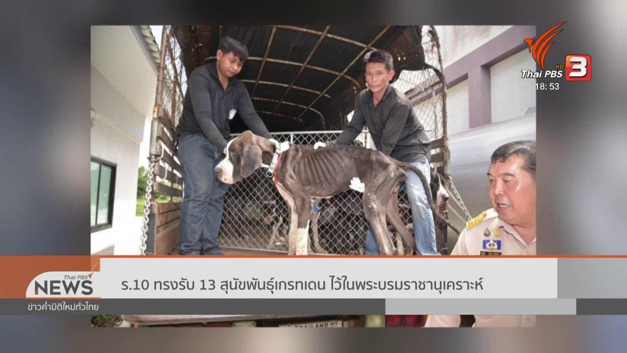 ข่าวค่ำ มิติใหม่ทั่วไทย - ร.10 ทรงรับ 13 สุนัขพันธุ์เกรทเดน ไว้ในพระบรมราชานุเคราะห์