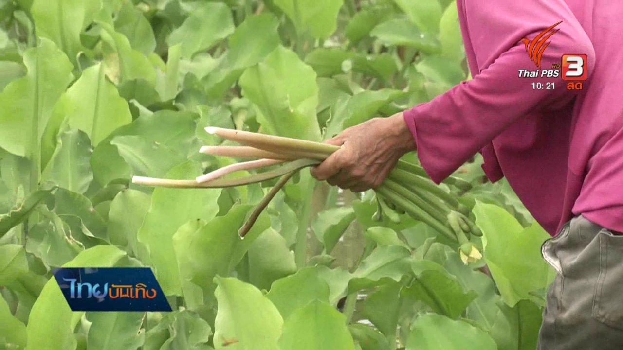"""ไทยบันเทิง - อิ่มมนต์รส : เปลี่ยนวัชพืช """"ก้านจอง"""" เป็นผักพื้นบ้าน"""