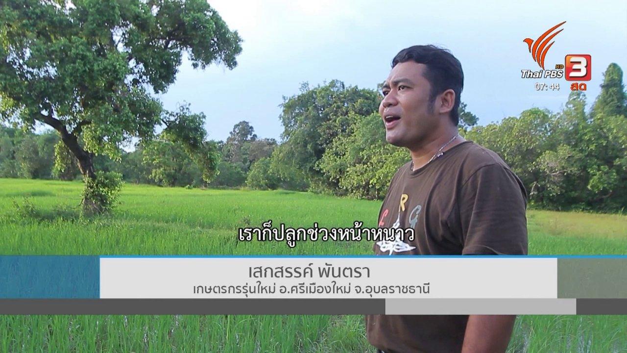 วันใหม่  ไทยพีบีเอส - C-site Report : น้ำท่วมอุบลฯ กระทบพื้นที่ทางการเกษตร