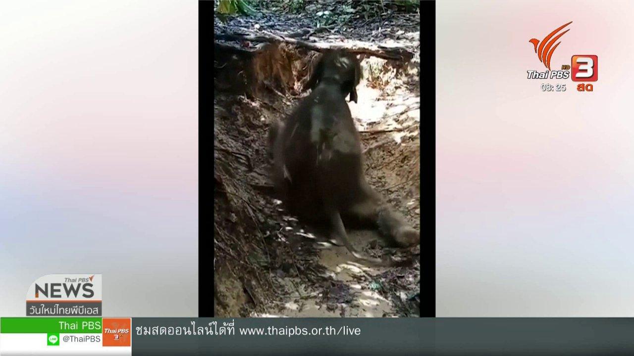 วันใหม่วาไรตี้ - จับตาข่าวเด่น : ช้างชบาแก้ว ขวัญใจโซเชียล
