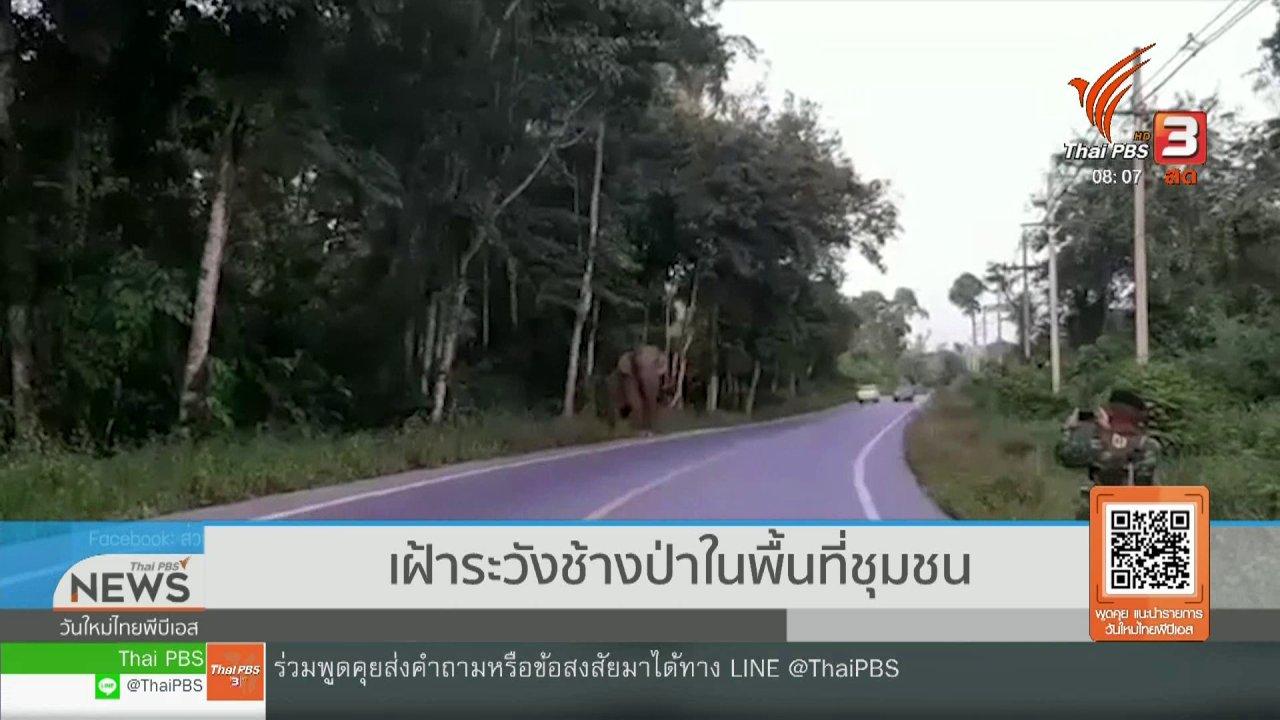 วันใหม่วาไรตี้ - จับตาข่าวเด่น : เฝ้าระวังช้างป่าในพื้นที่ชุมชน