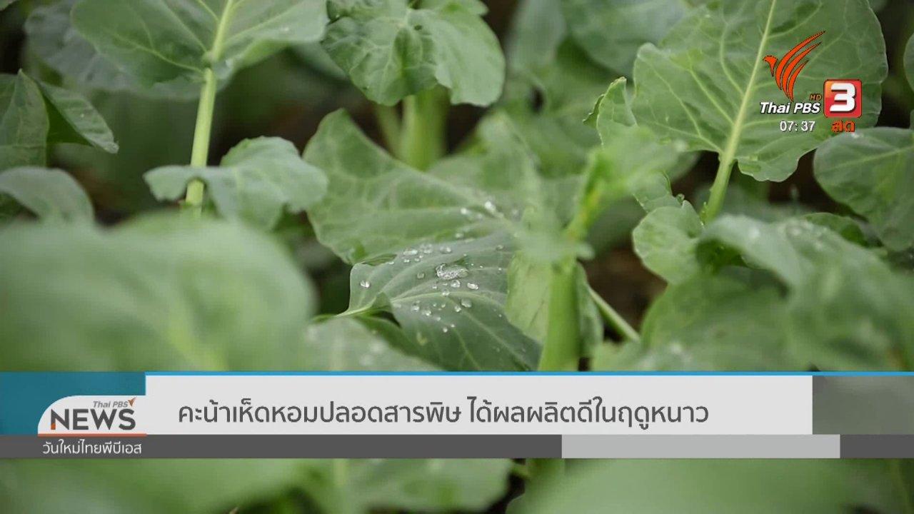 วันใหม่  ไทยพีบีเอส - ทำมาหากิน ดินฟ้าอากาศ : คะน้าเห็ดหอมปลอดสารพิษ ได้ผลผลิตดีในฤดูหนาว