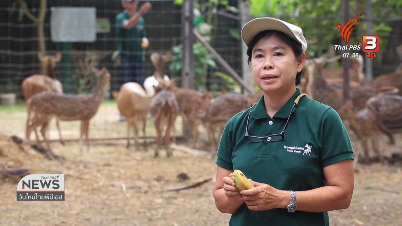 วันใหม่  ไทยพีบีเอส - ทำมาหากิน ดินฟ้าอากาศ : กวาง สัตว์เศรษฐกิจตัวใหม่ เหมาะกับอากาศเมืองไทย