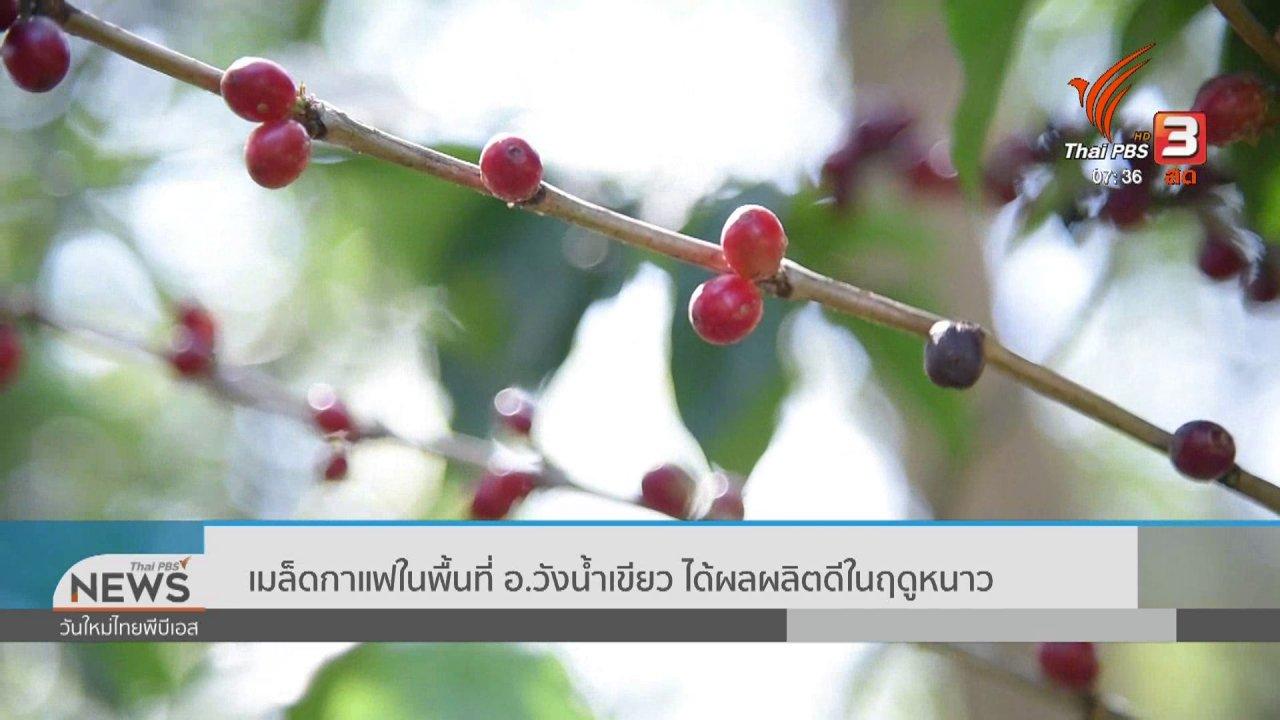 วันใหม่  ไทยพีบีเอส - ทำมาหากิน ดินฟ้าอากาศ : เมล็ดกาแฟในพื้นที่ อ.วังน้ำเขียว ได้ผลผลิตดีในฤดูหนาว
