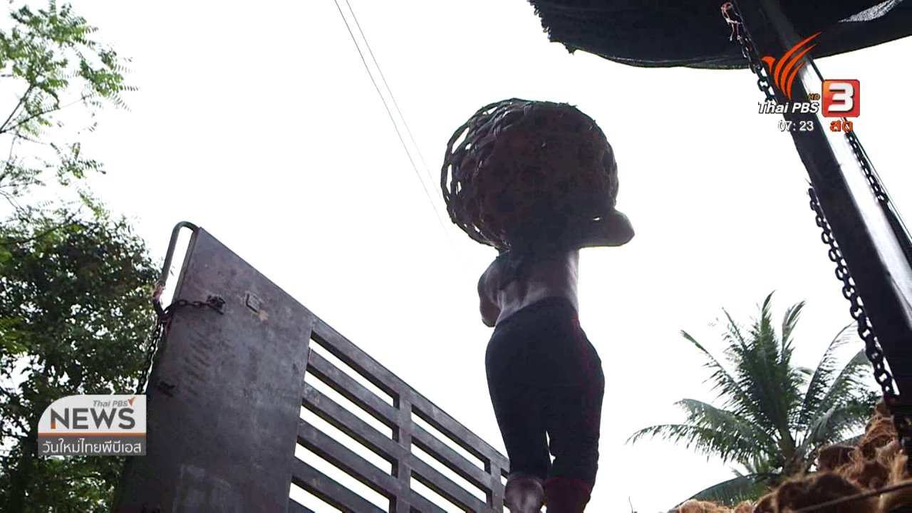 วันใหม่  ไทยพีบีเอส - ชั่วโมงทำกิน : ผลกระทบนโยบายนำเข้ามะพร้าวจากต่างประเทศ