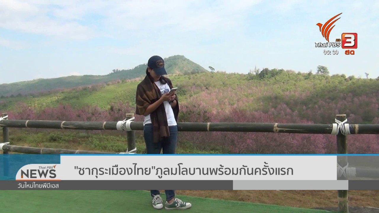 """วันใหม่  ไทยพีบีเอส - """"ซากุระเมืองไทย"""" ภูลมโลบานพร้อมกันครั้งแรก"""
