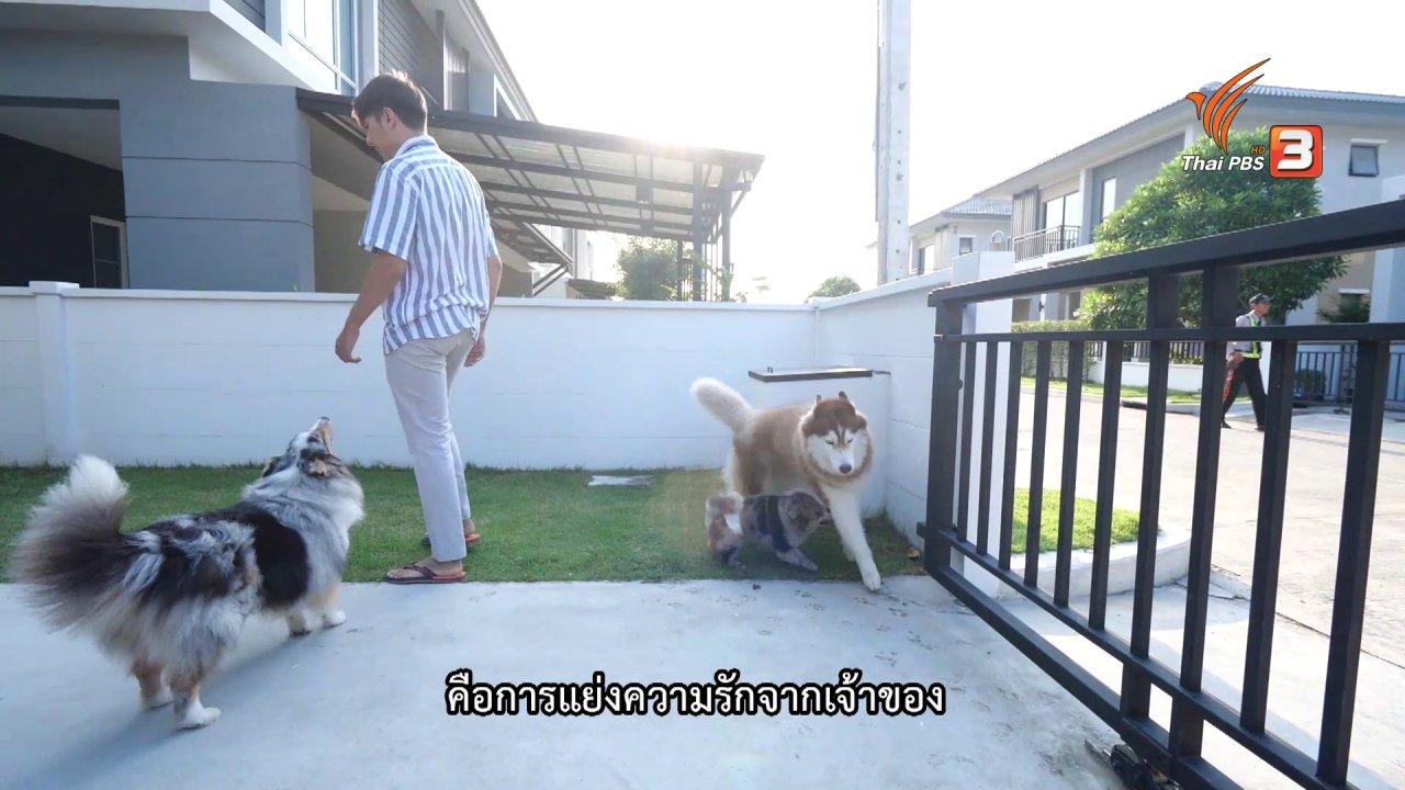 ผู้พิทักษ์รักโฮ่งเหมียว - เคล็ดไม่ลับดูแลโฮ่งเหมียว : วิธีป้องกันสุนัขในบ้านกัดกัน