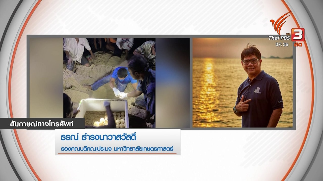วันใหม่  ไทยพีบีเอส - กินอยู่รู้รอบ : ติดตามเต่ามะเฟือง