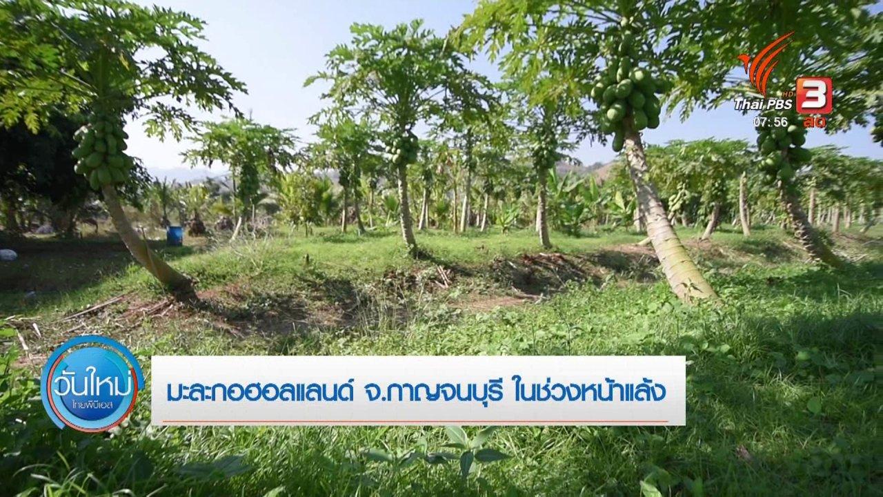วันใหม่  ไทยพีบีเอส - ทำมาหากิน ดินฟ้าอากาศ : มะละกอฮอลแลนด์ จ.กาญจนบุรี ในช่วงหน้าแล้ง