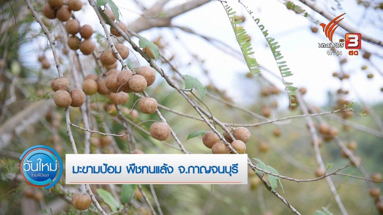 วันใหม่  ไทยพีบีเอส - ทำมาหากิน ดินฟ้าอากาศ : มะขามป้อม พืชทนแล้ง จ.กาญจนบุรี