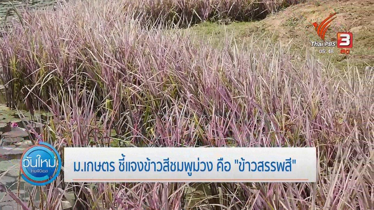 """วันใหม่  ไทยพีบีเอส - ม.เกษตร ชี้แจงข้าวสีชมพูม่วง คือ """"ข้าวสรรพสี"""""""