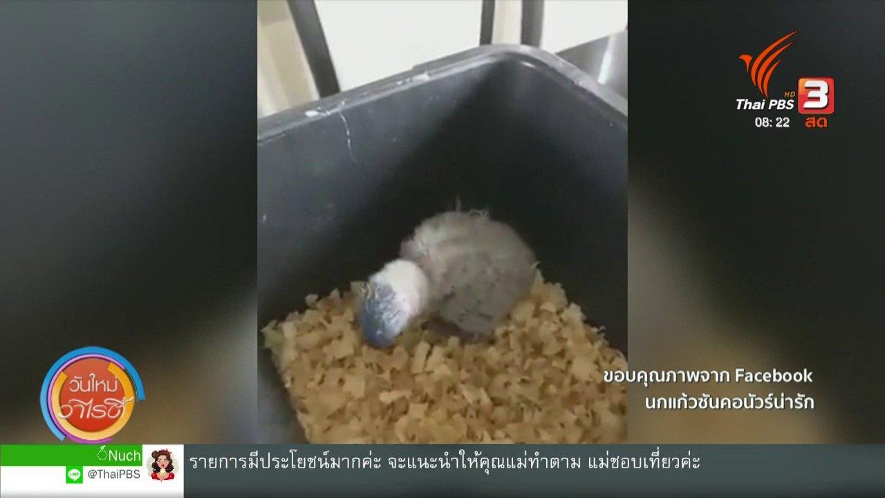 วันใหม่วาไรตี้ - จับตาข่าวเด่น : นกแก้วซันคอนัวร์น่ารัก
